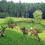 Freigehege im Wildpark Schwarze Berge